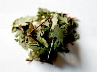 Hierba Abre camino (Eupatorium villosum)